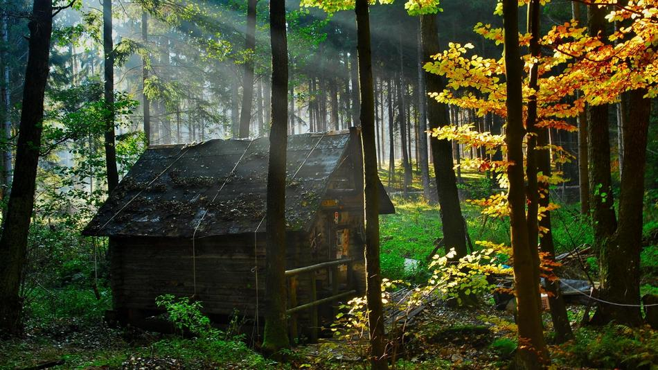 forest_house_1 (1)