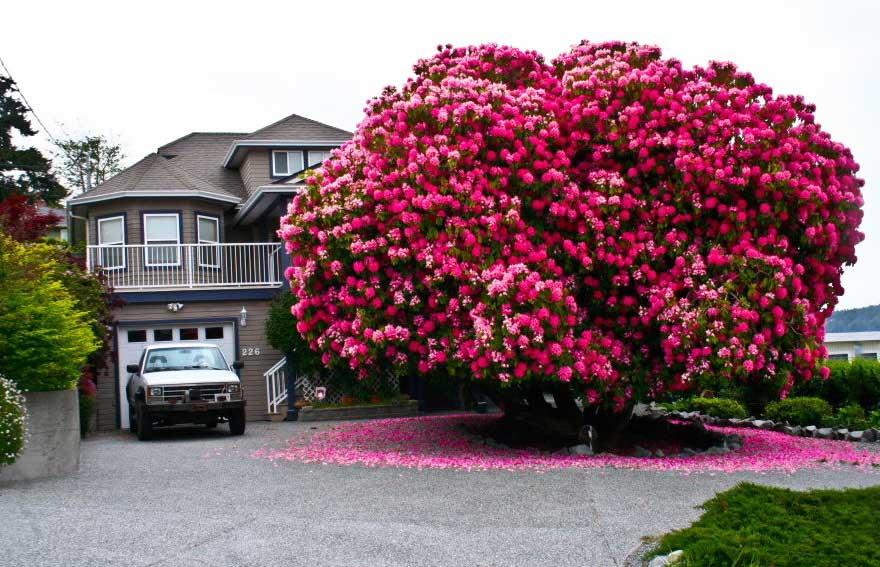 amazing-trees-1