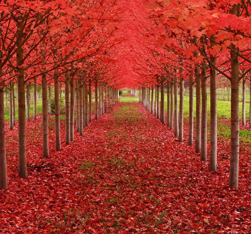 amazing-trees-10