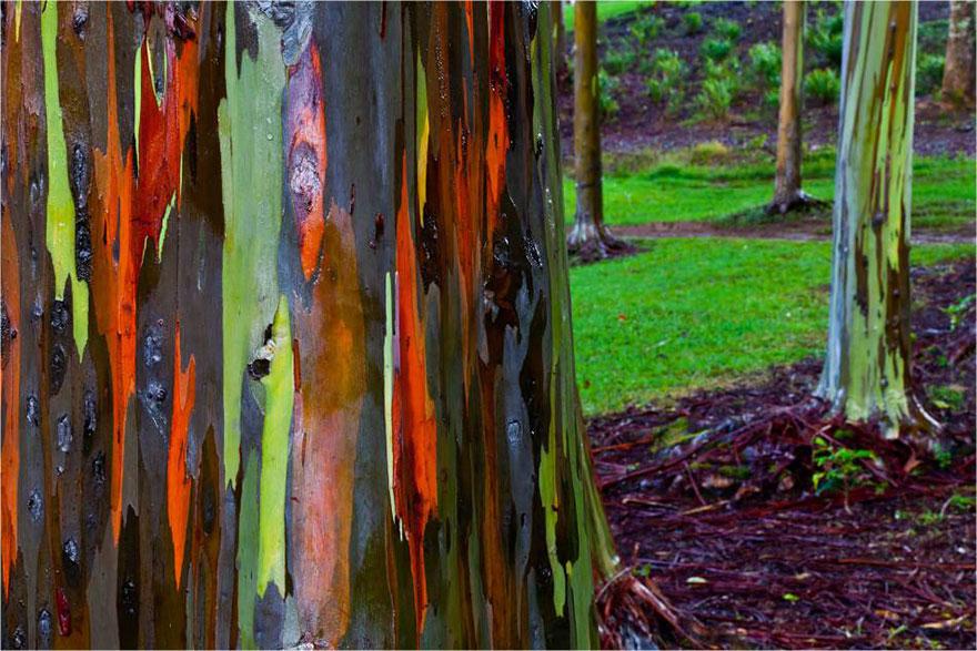 amazing-trees-11-2