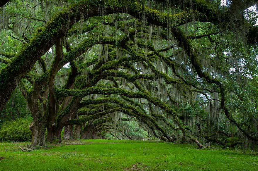 amazing-trees-13