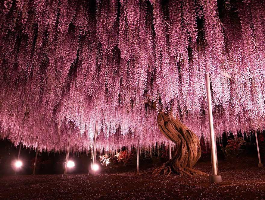amazing-trees-2-2