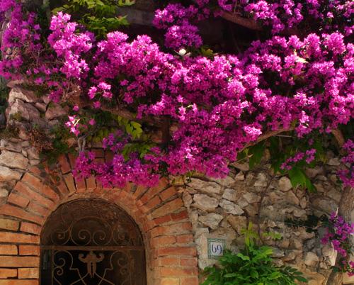 una-trepadora-llamativa-y-de-gran-belleza-la-buganvilla_ct0g5