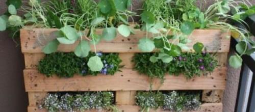 jardin-vertical-palet