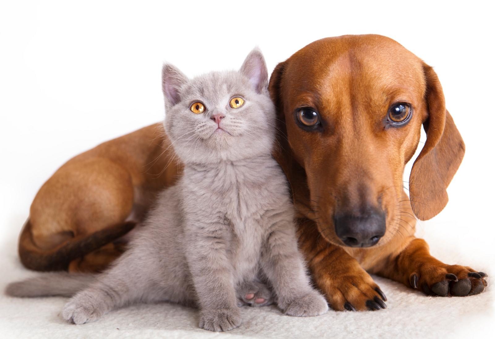Pronto podrás saber lo que piensan tus mascotas