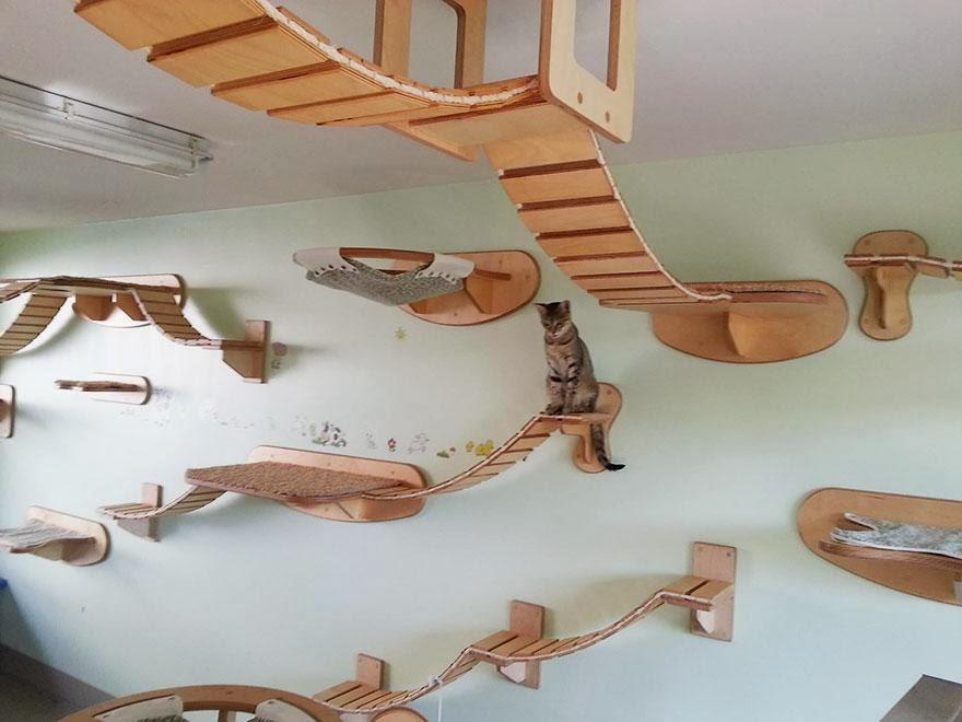 casas para gatos 10}