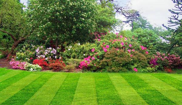 portada jardín